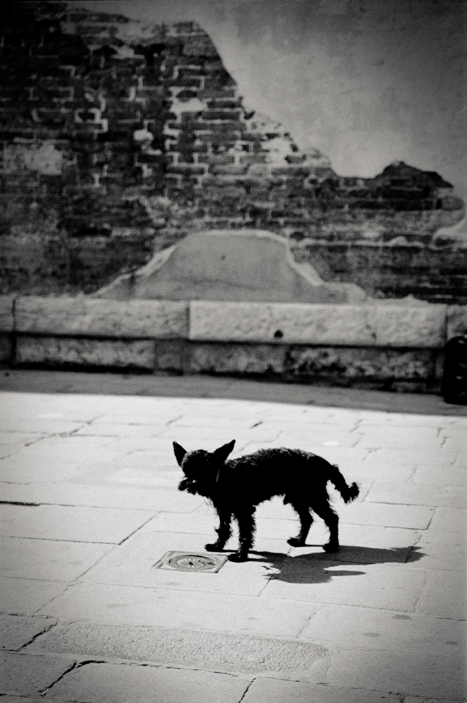 local dog, Venice, Italy 2001.