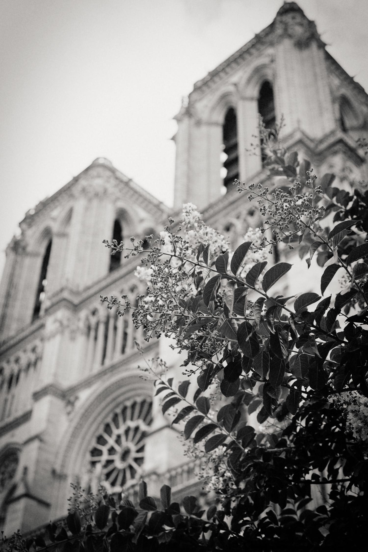 Notre Dame, Paris 2014.