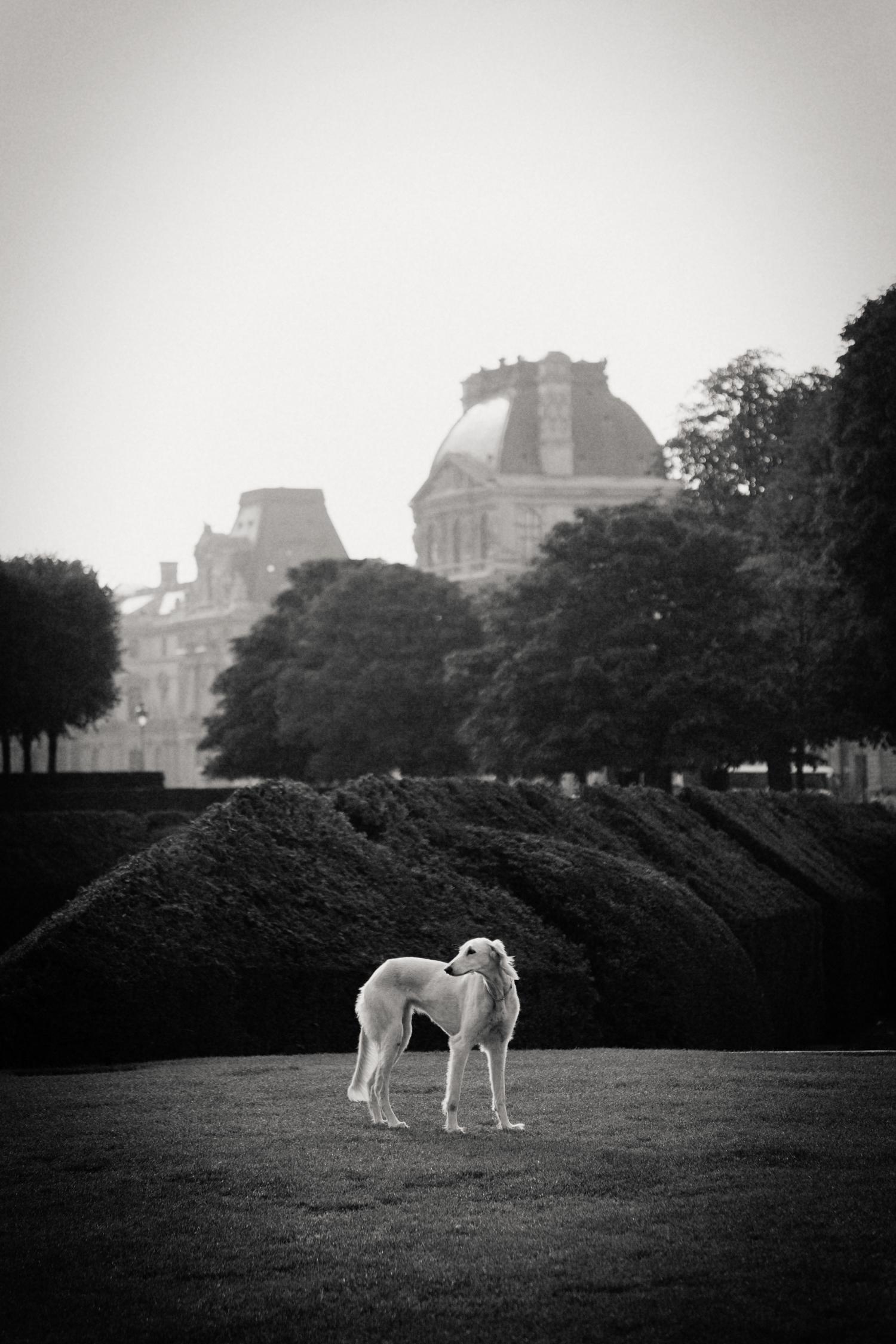 dog in park, Paris 2014.