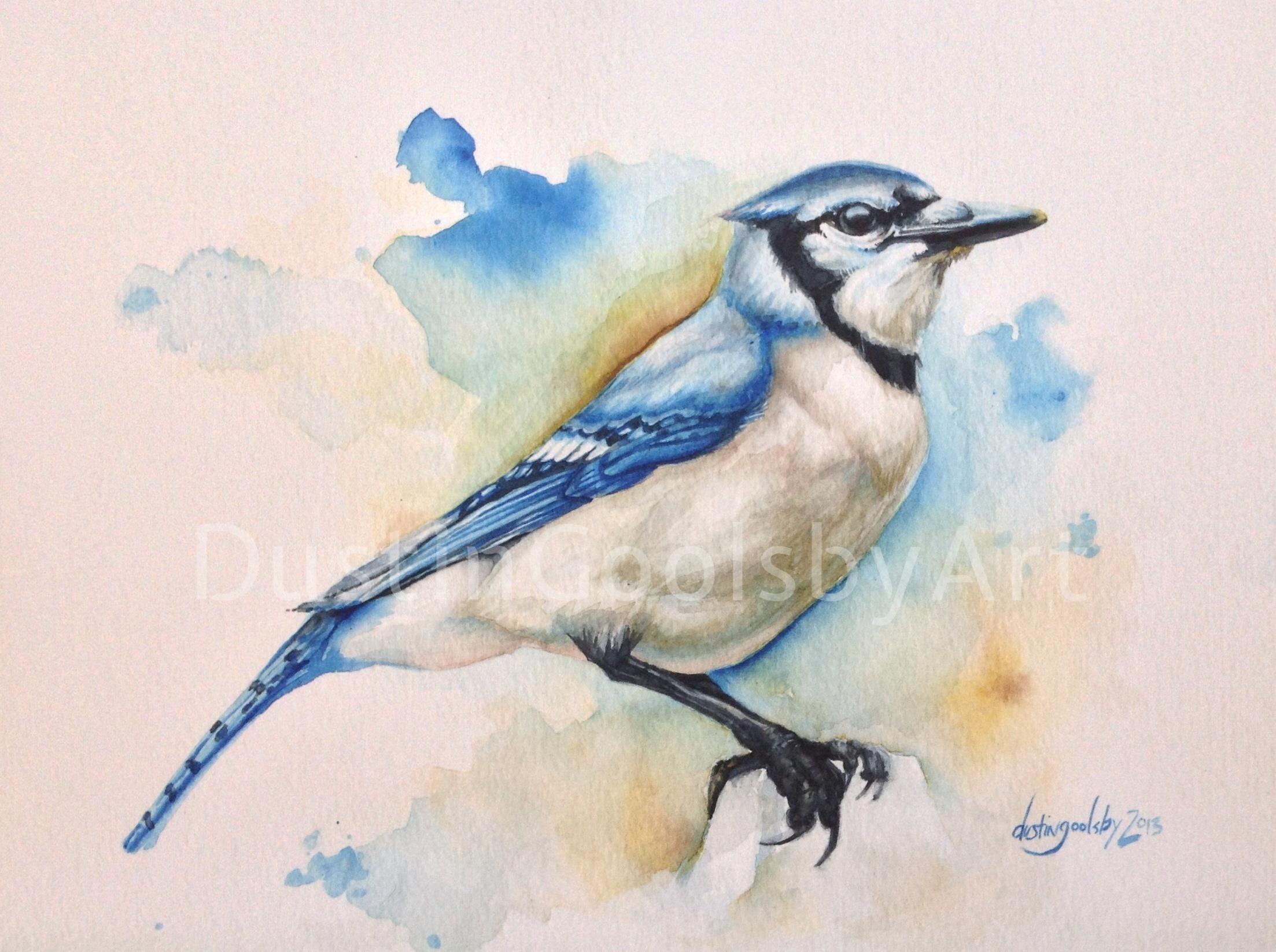 Watercolor-Bluejay-Dustin-Goolsby-Art.JPG