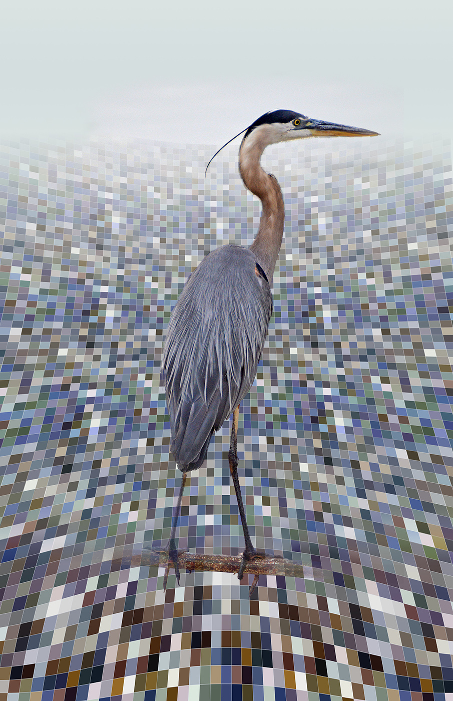 David Blow, Morning Mist, Digital Photo