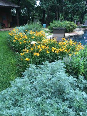 yellowdaylillies.jpg