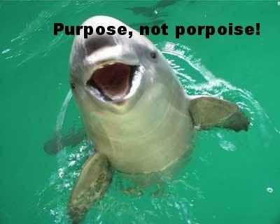 porpoise.jpg