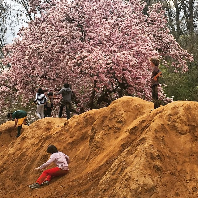 #sunday in #prospectpark.   #dirtpile #kids #spring #cherryblossom  (at Prospect Park)