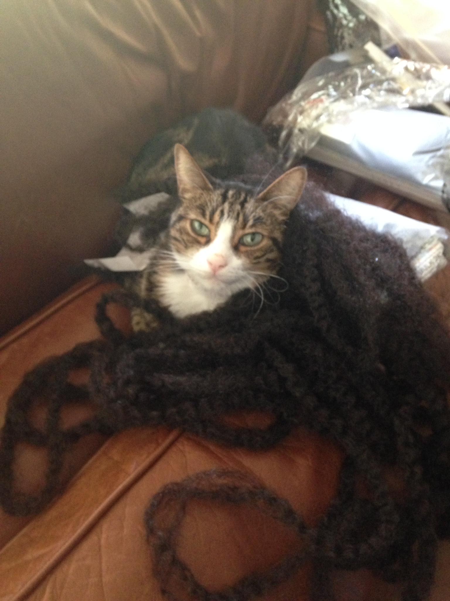 cat in fake hair
