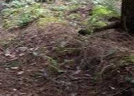 ForestSB_Duff_deerMiss2.jpg