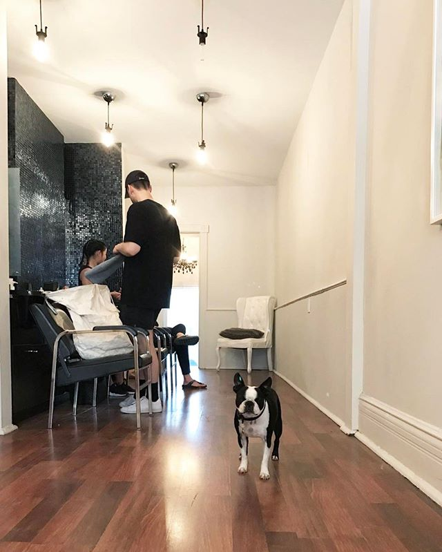We loove your furry friends at Shagg! Big salon, little pup 🐾💕🐾💕⠀ -⠀ -⠀ -⠀ #torontodogs #toronto #yorkvillesalon #yorkville #salon #dogs #frenchbulldog #furryfriend #love #hair #hairsalon #torontohair #edgeandgraincontent