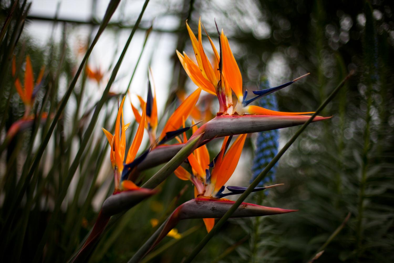 Flowers-024.jpg