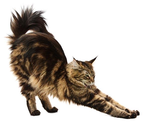 cat!.jpg