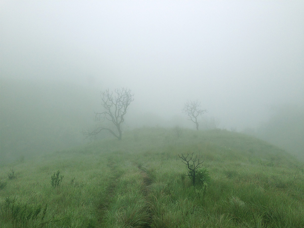 Unpredictable Drakensberg weather – thick mist above the Mankulumani Forest.