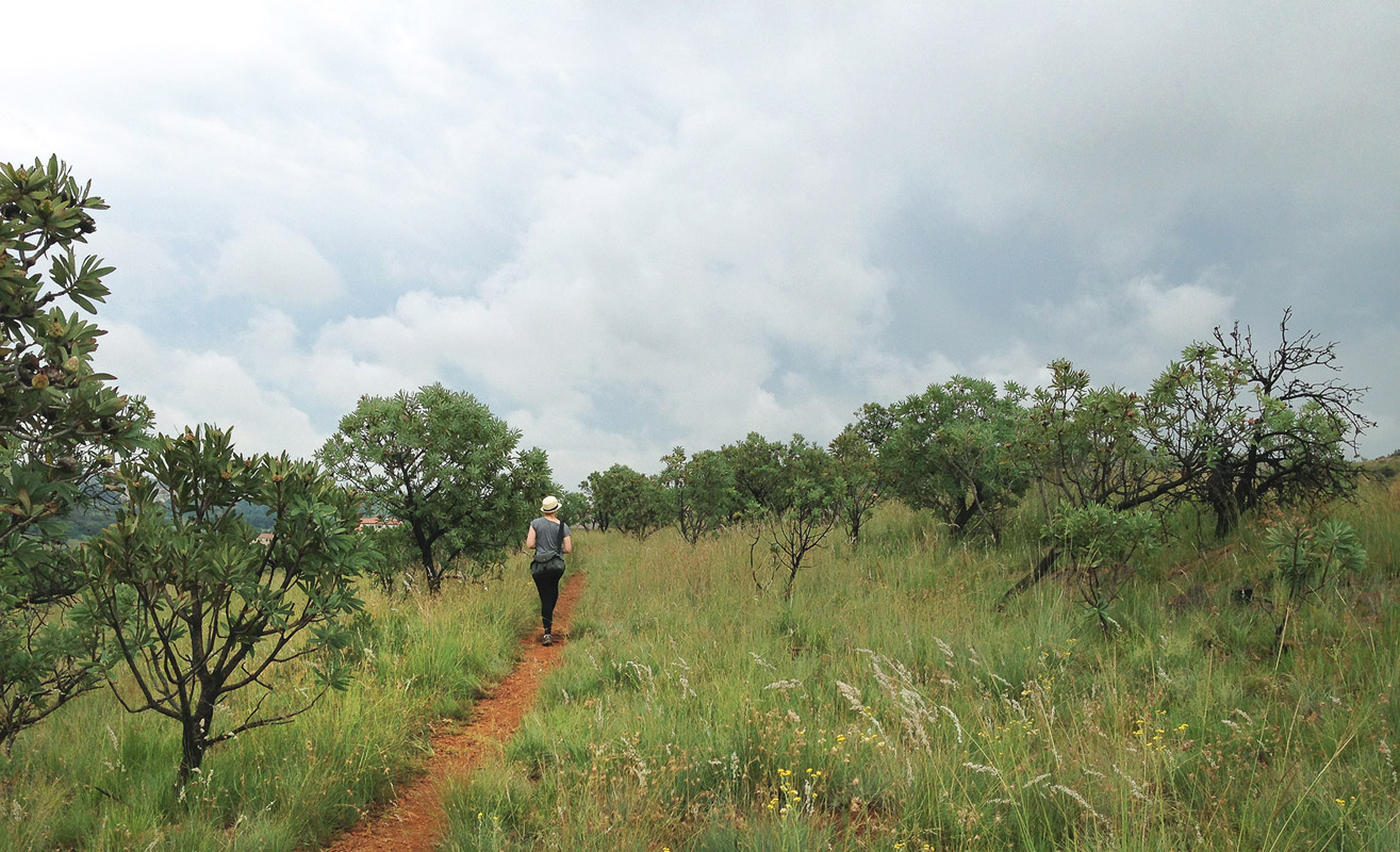 The Geological Trail as it tops out above the Walter Sisulu National Botanical Gardens.