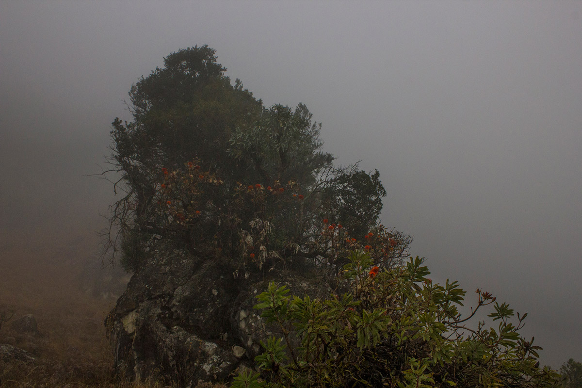 Day 1 – Sugarbush in the mist.
