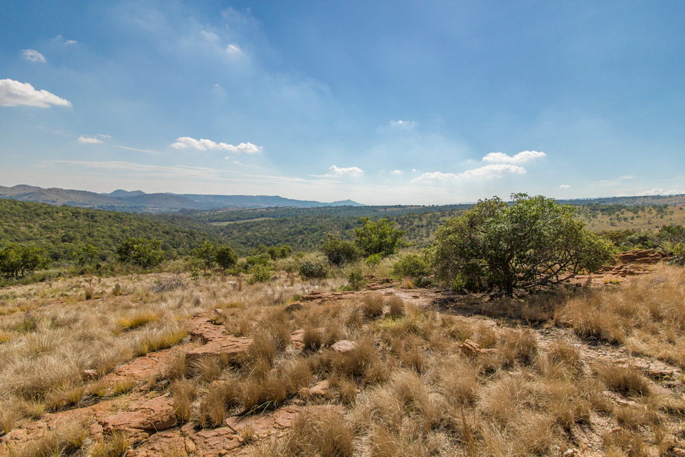 Grasslands between Ysterhoutkloof and Grootkloof, Magaliesberg.