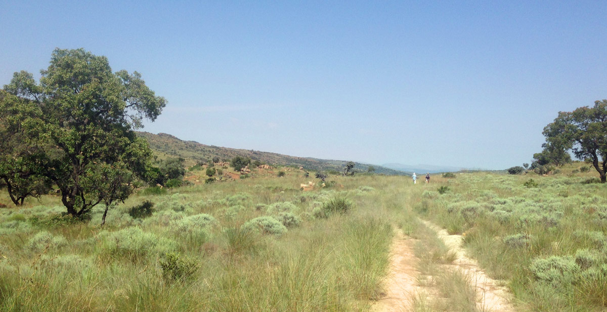 Jeep track and grasslandsen route to Castle Gorge, Magaliesberg.