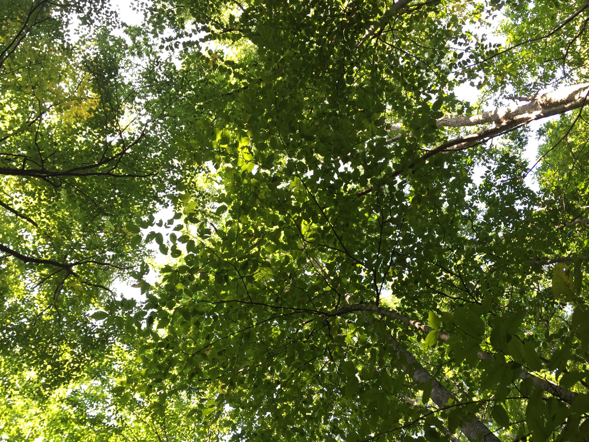 The electric green canopy of the forest at the beginning of our journey. We spent thirty days outside, without having to wear sunscreen once