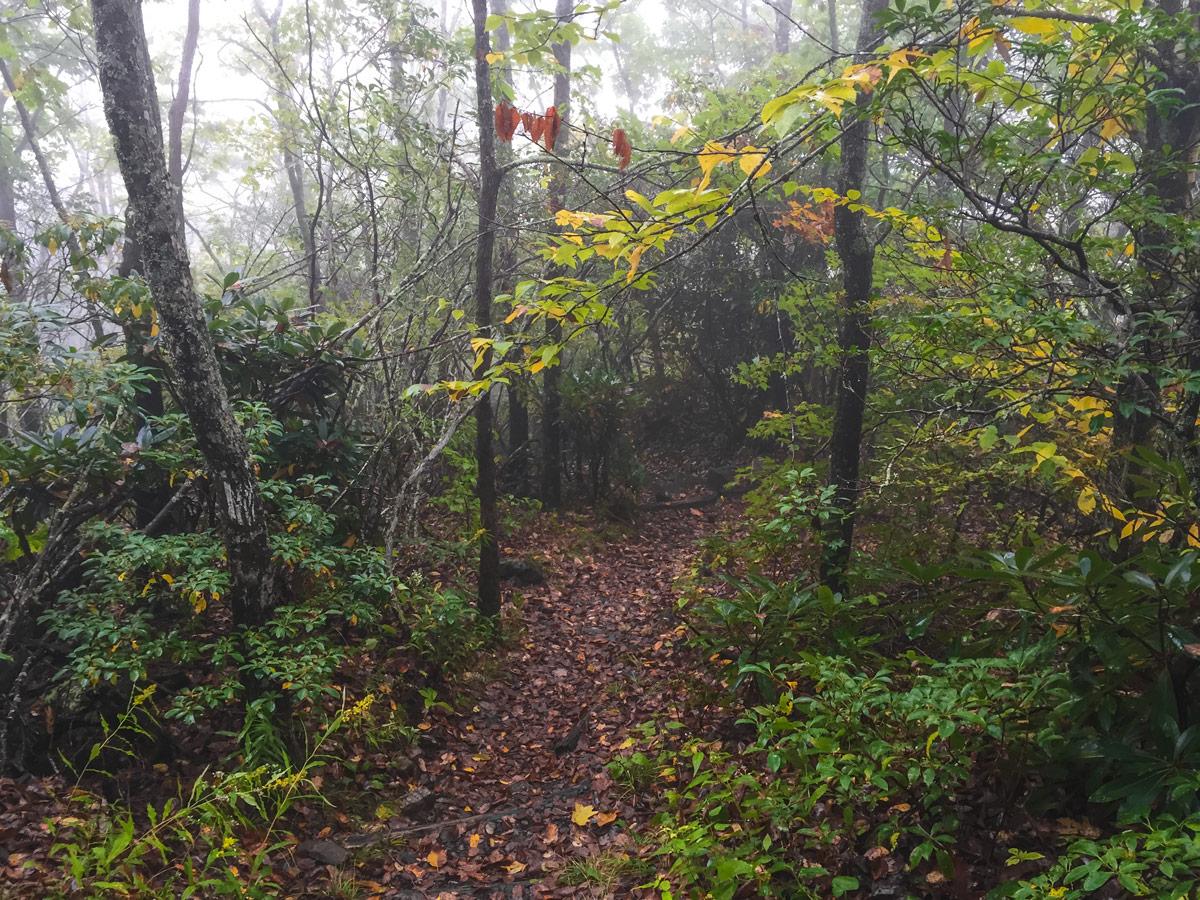 13 North Carolina Appalachian Trail.jpg