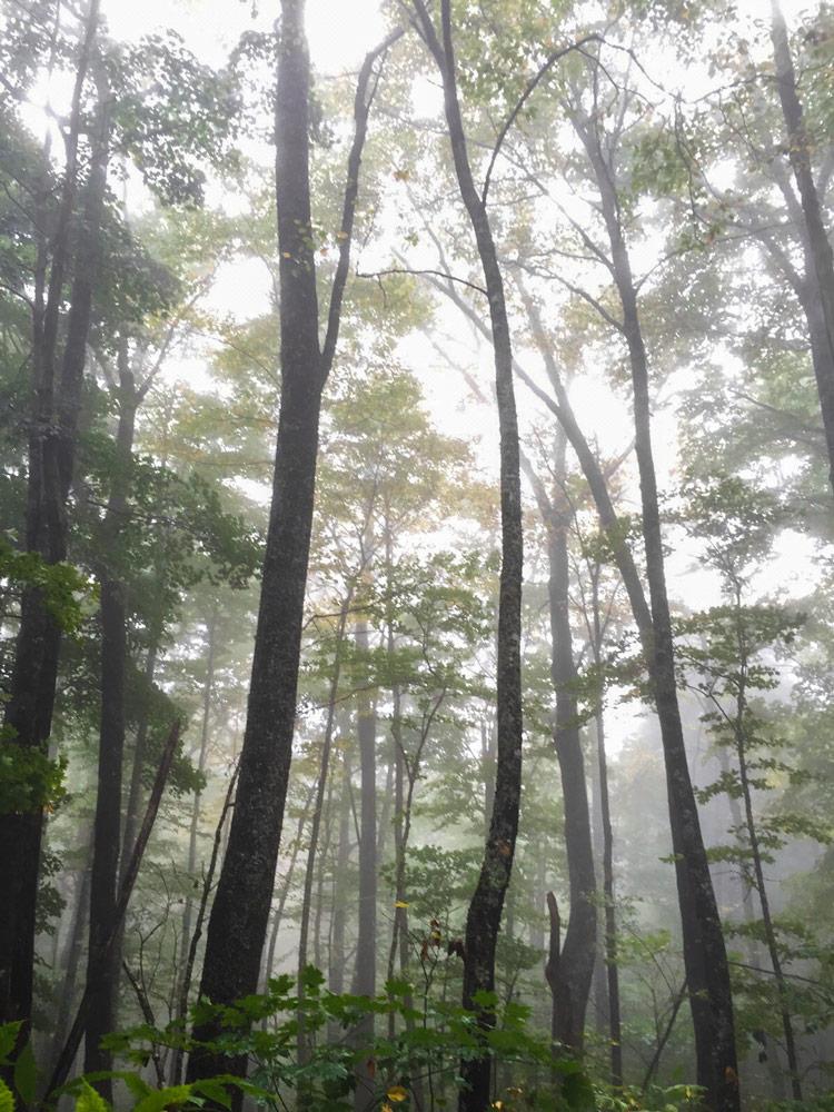 14 North Carolina Nantahala Forest.jpg