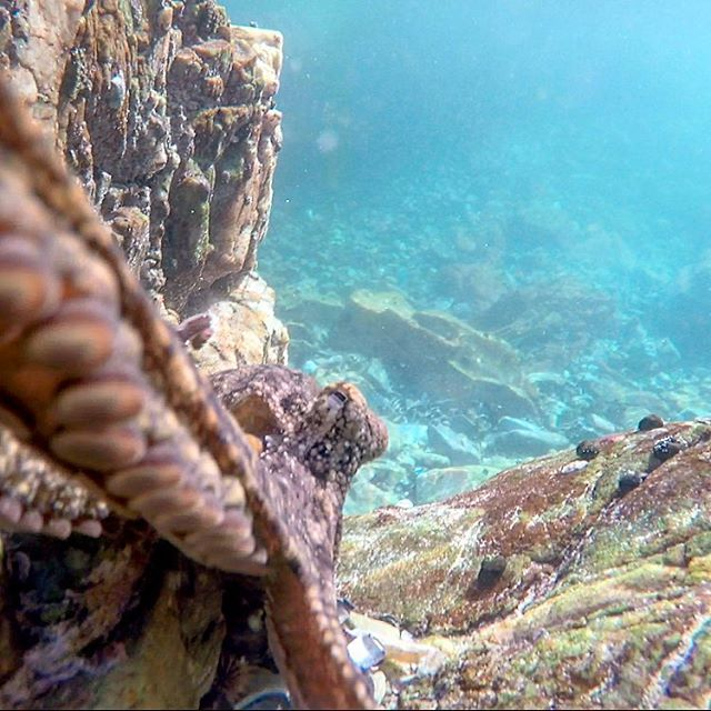 Not the usual picture you take an a hike. There are some beautiful rock pools near the first hut that are definitely worth exploring. An #octopus fighting to get my #gopro. #sofar #otter #ottertrail #tsitsikamma #hike #hiking #travel #southafrica #thisissouthafrica