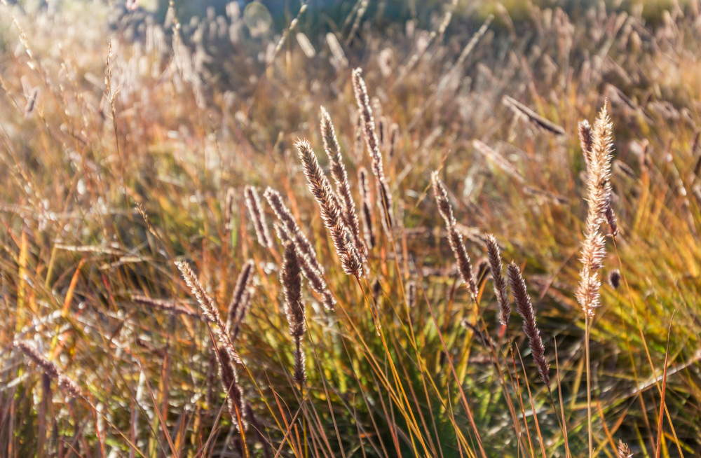 The grasslands in the area are beautiful even in the middle of winter, making this a great year-round hike.