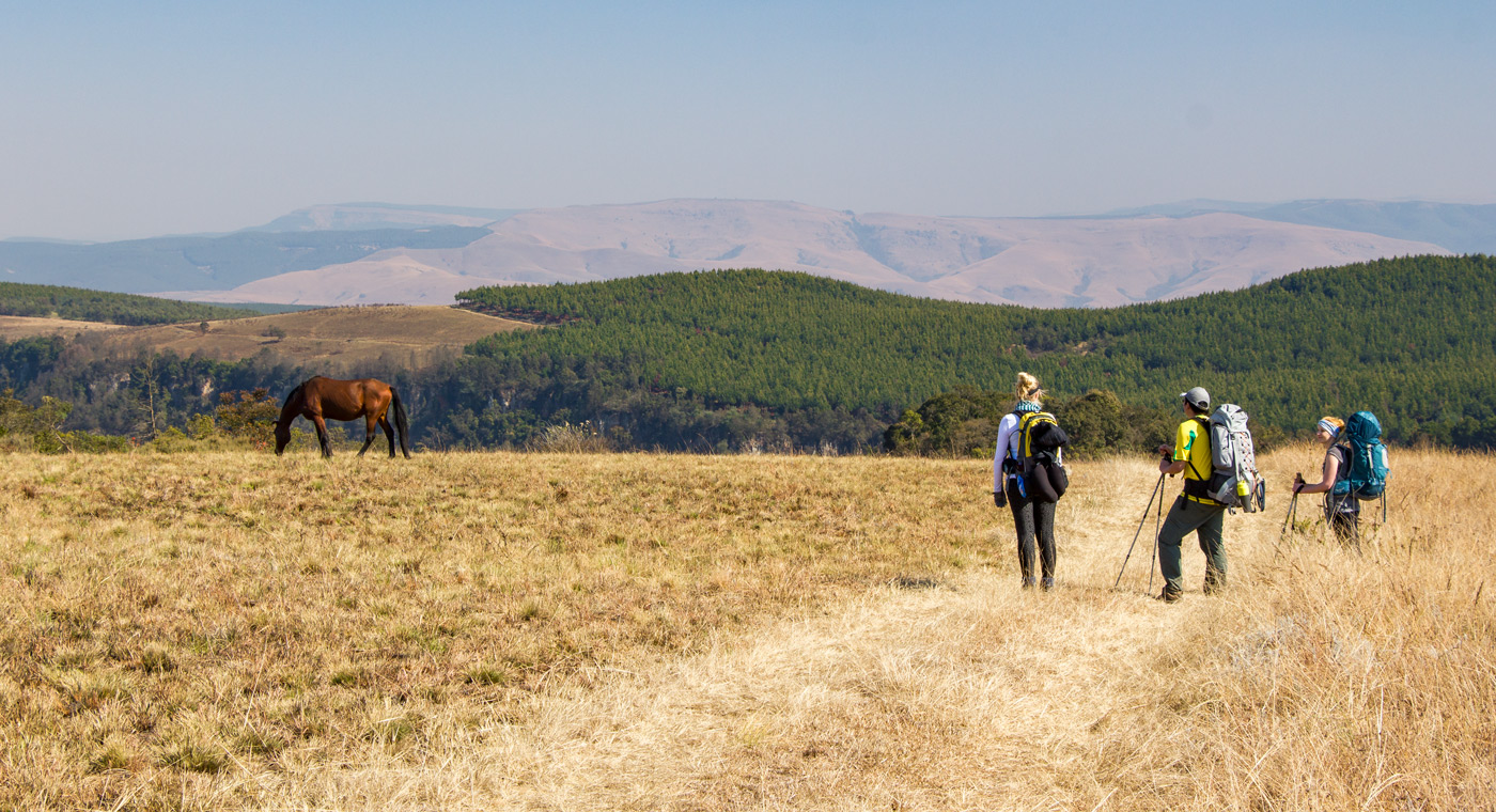 Wild horses – Day 1,Kaapsche Hoop to Florence Hill Hut. Click to enlarge.