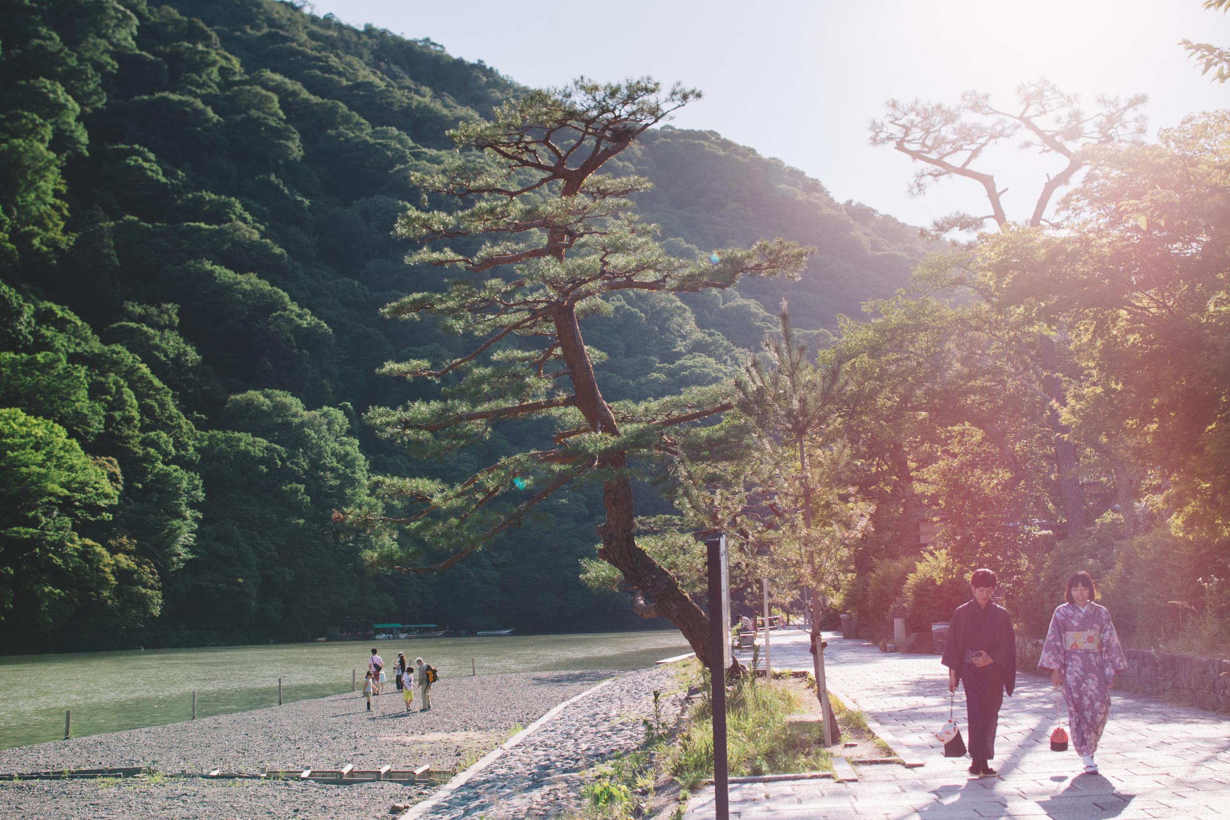Japan, DC Photography, Dan Chern Photography, Bay Area Photography, Wedding Photography, Travel, Travel Photography, Tokyo, Kyoto, Odaiba, Osaka, Bamboo Grove, Bamboo, Japanese People