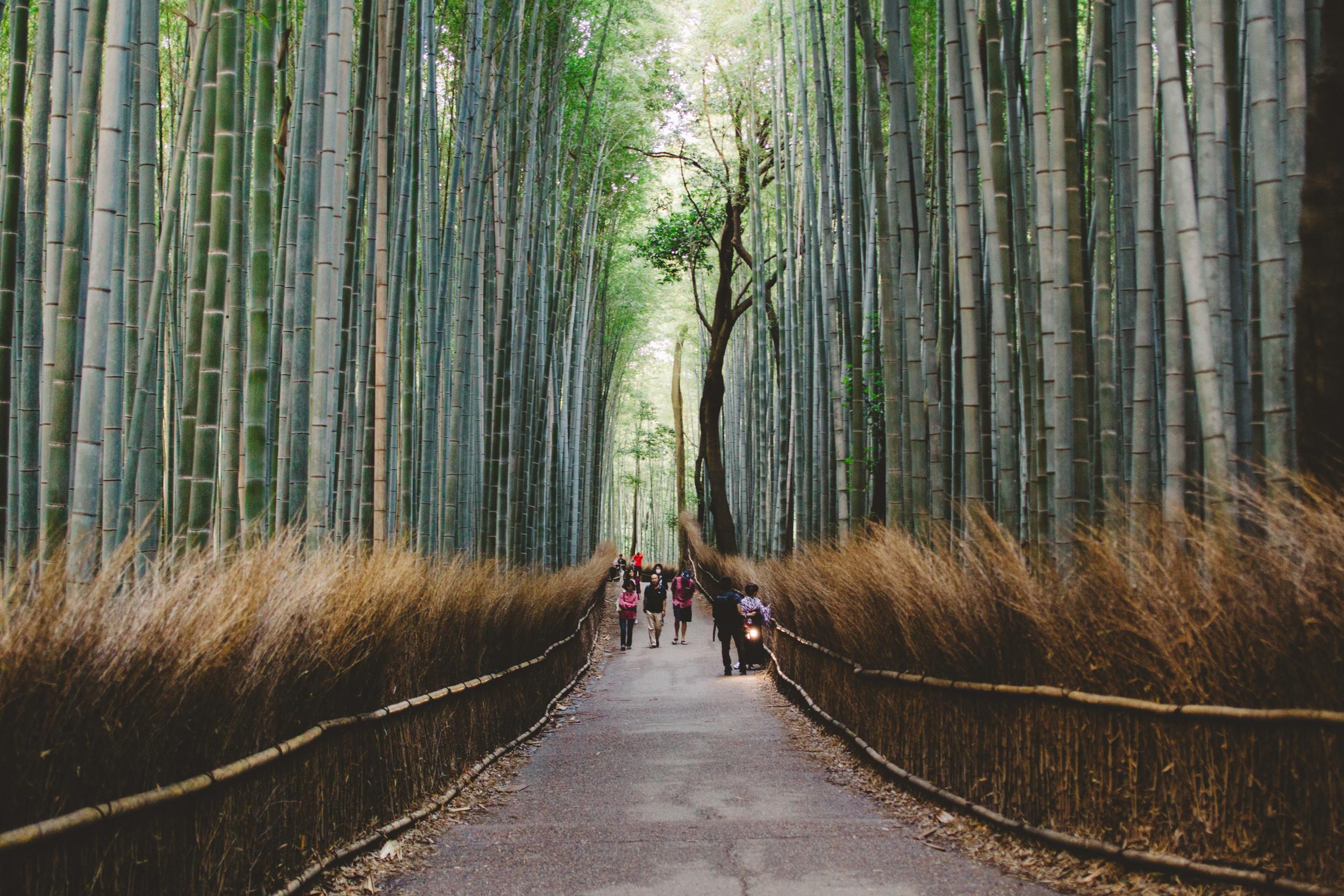 Japan, DC Photography, Dan Chern Photography, Bay Area Photography, Wedding Photography, Travel, Travel Photography, Tokyo, Kyoto, Odaiba, Osaka, Bamboo Grove, Bamboo