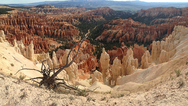 9.27.15  > Inspiration Point > Photo > Bryce Canyon, UT > Giraffe Necks > NOT AVAILABLE FOR PURCHASE