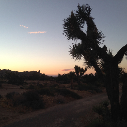 7.12.16   > Running > Photo > Joshua Tree, CA. > NOT AVAILABLE FOR PURCHASE