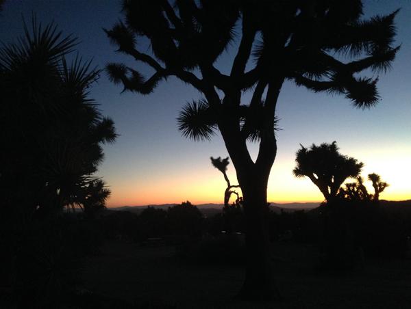 7.13.16   > Wake > Photo > Joshua Tree, CA. > NOT AVAILABLE FOR PURCHASE