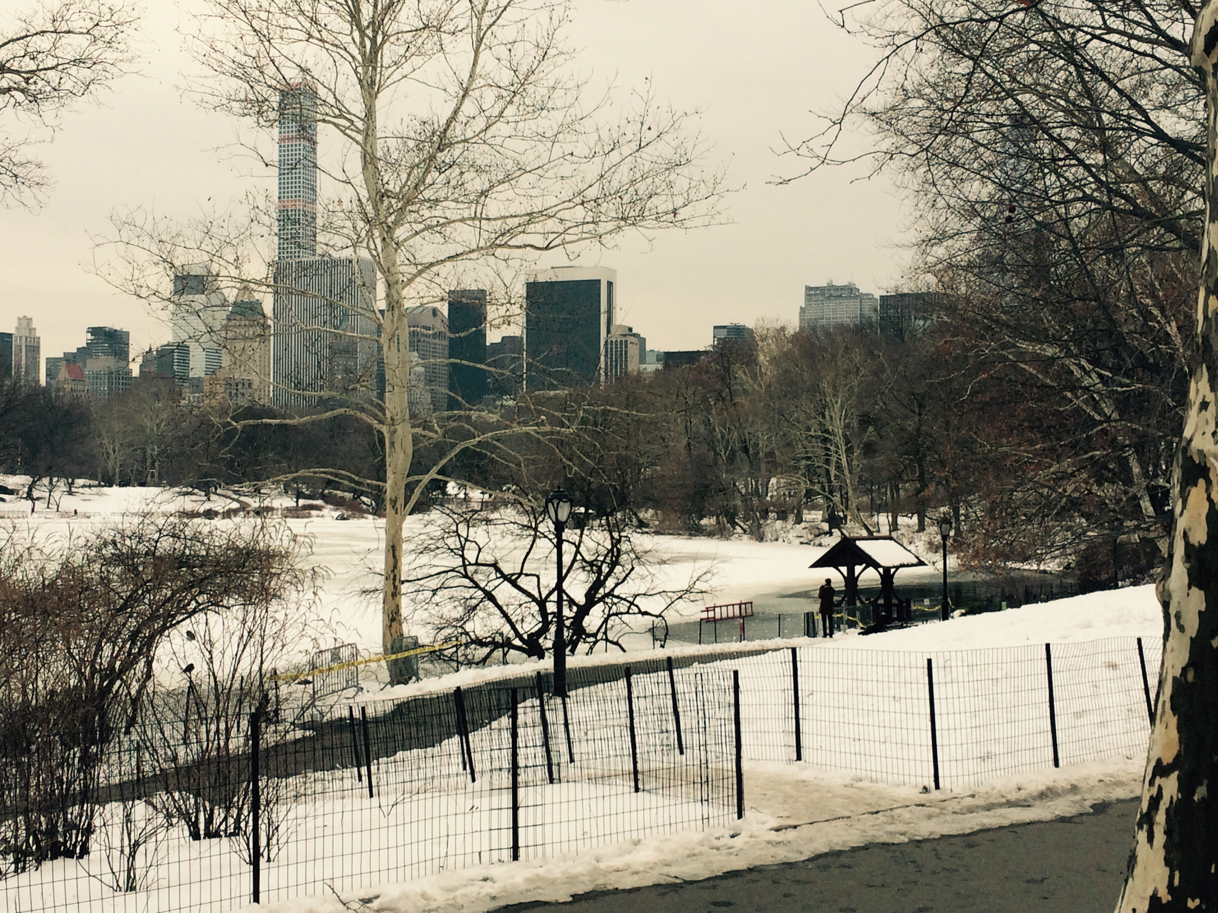 Snowy February 1st, Central Park, Manhattan, 2015