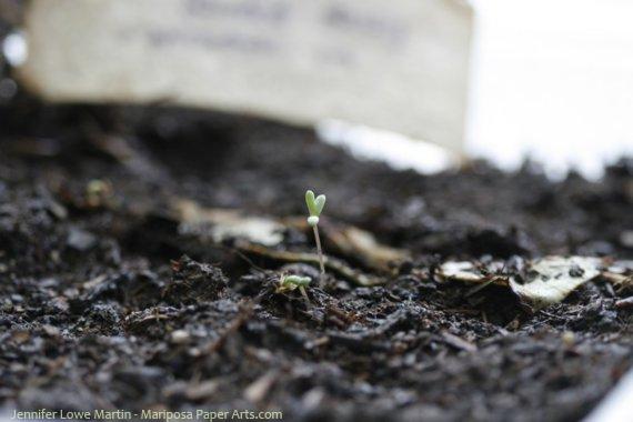 Wildflower Seeded Paper