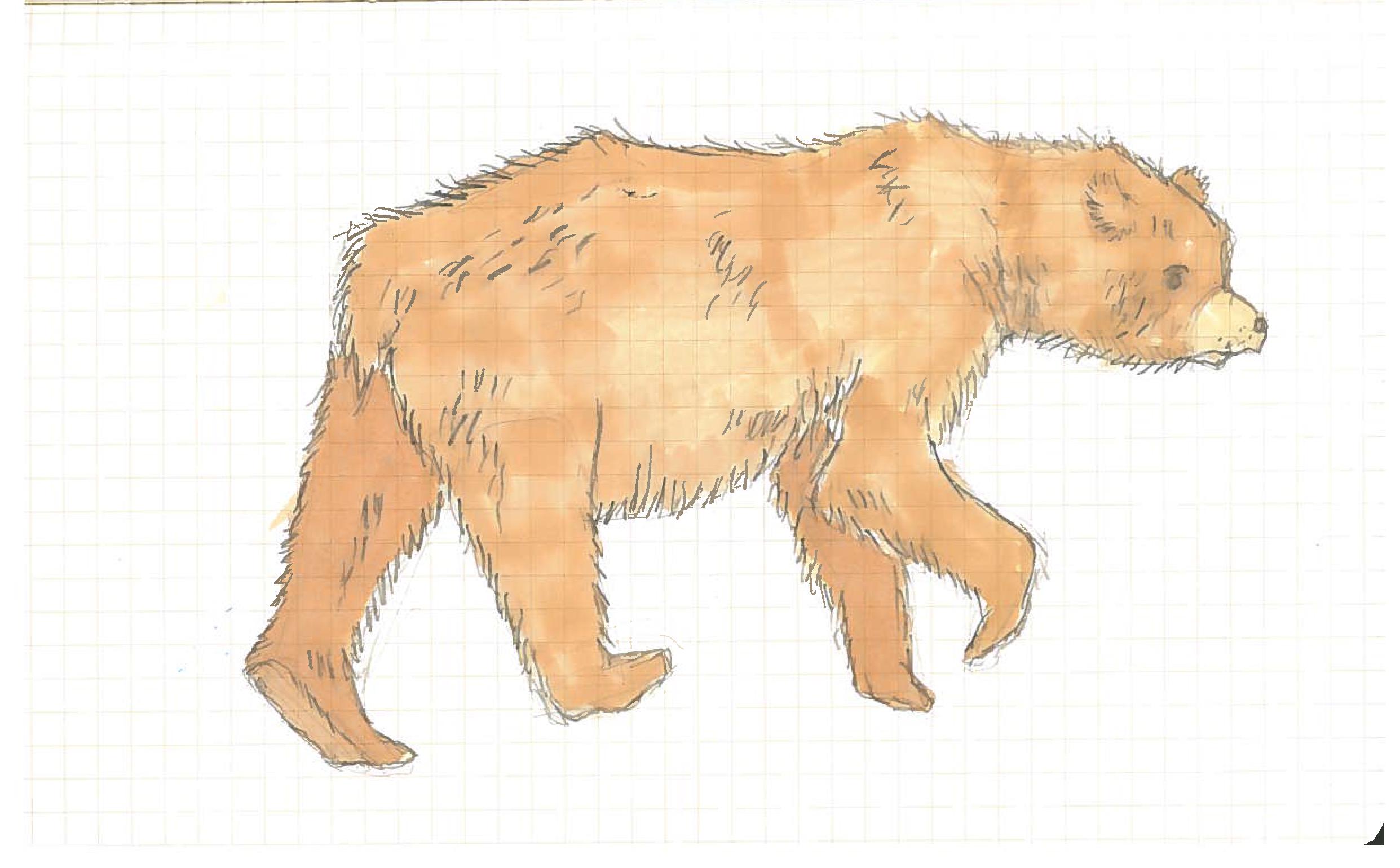 Bear_Color.jpg