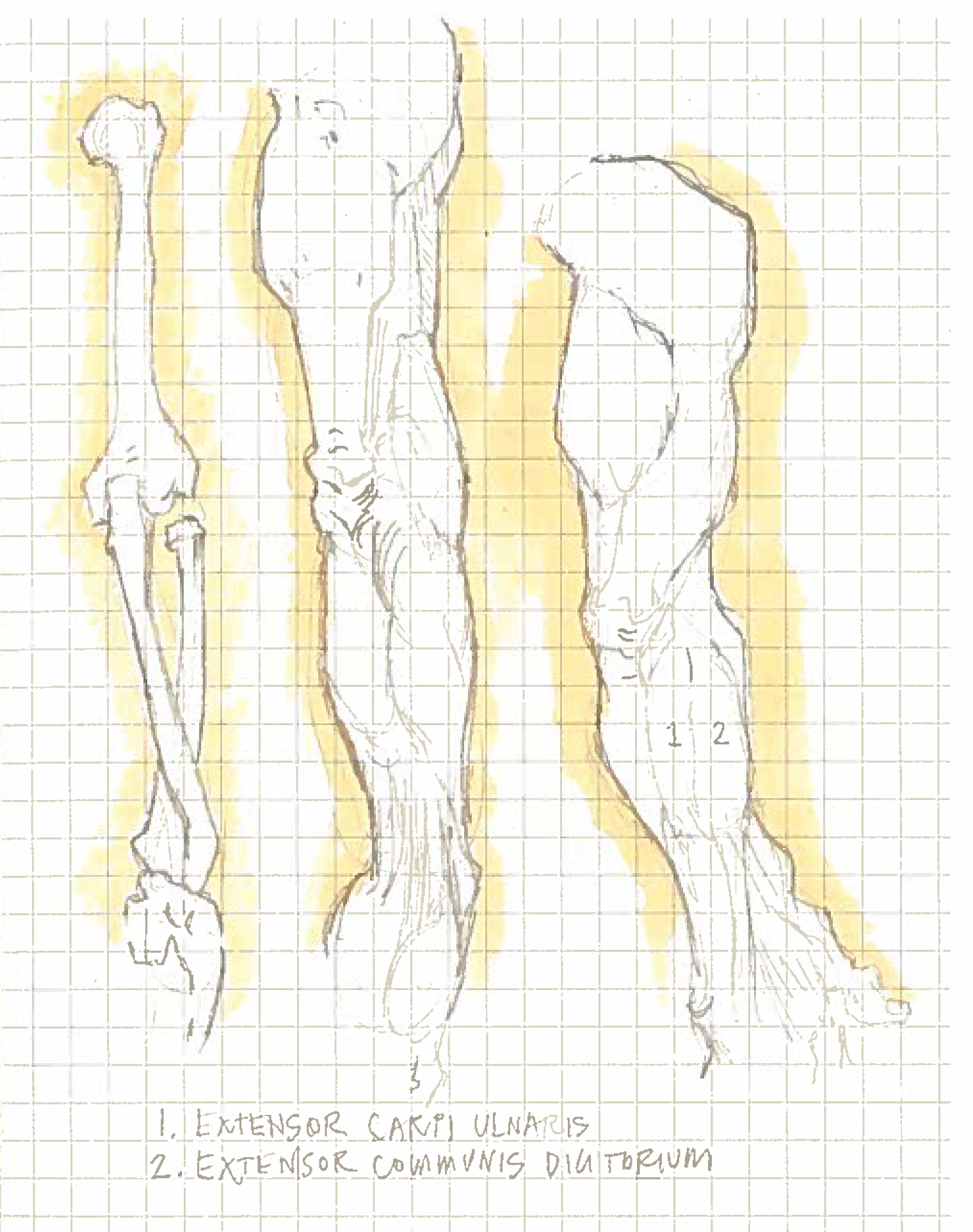 Arms 1.jpg