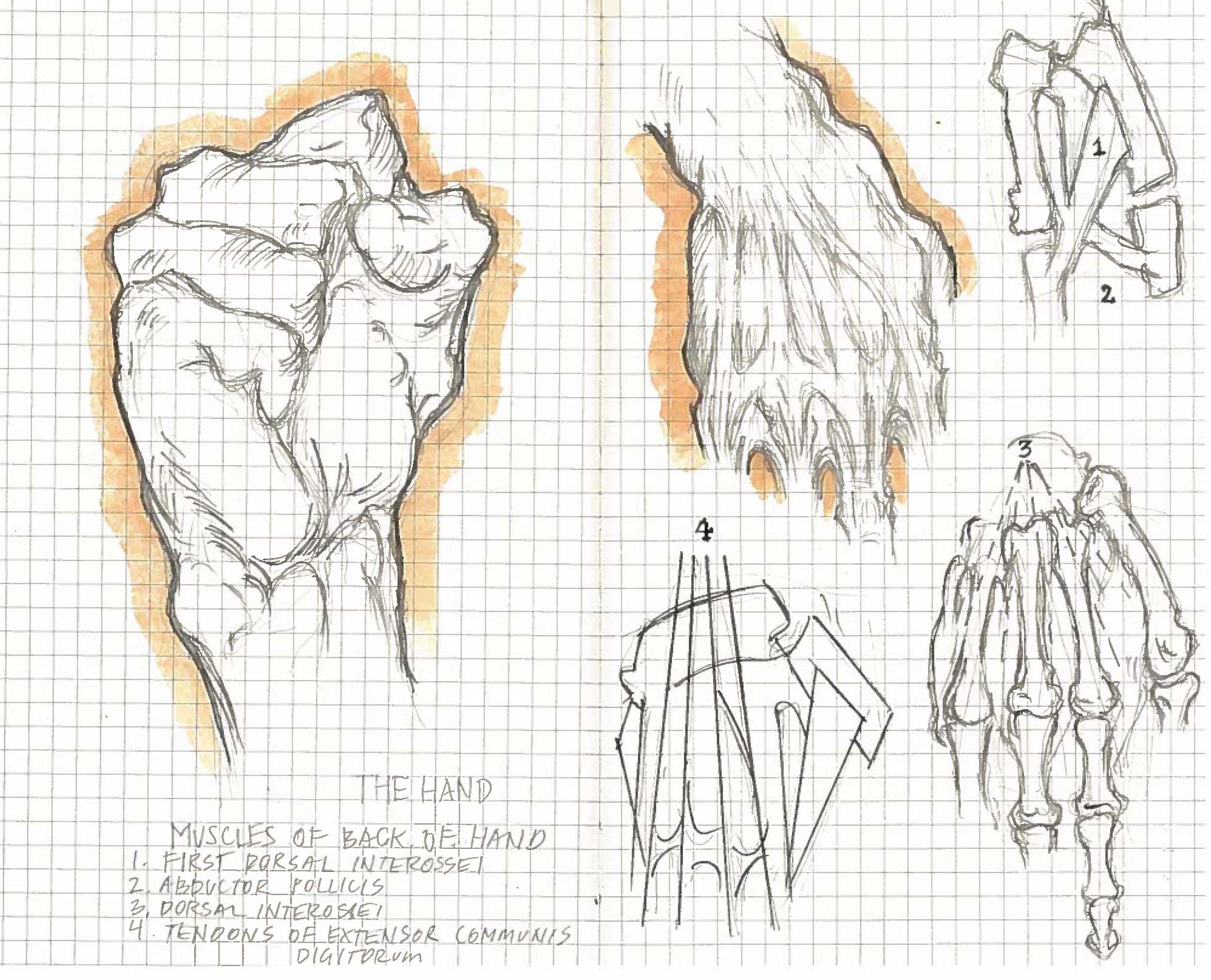 Hands_Bones.jpg