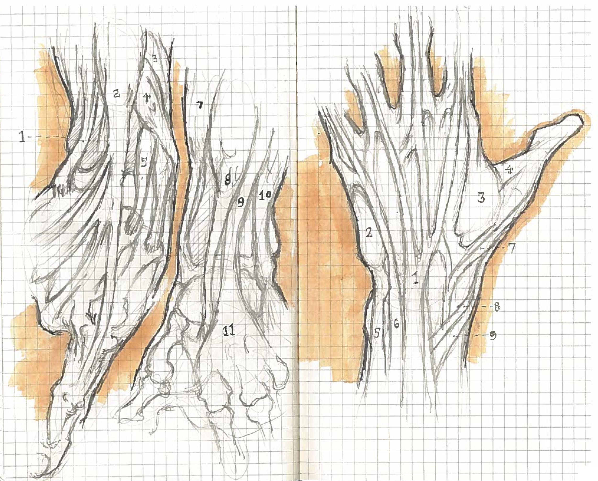 Hands 2_2016.jpg