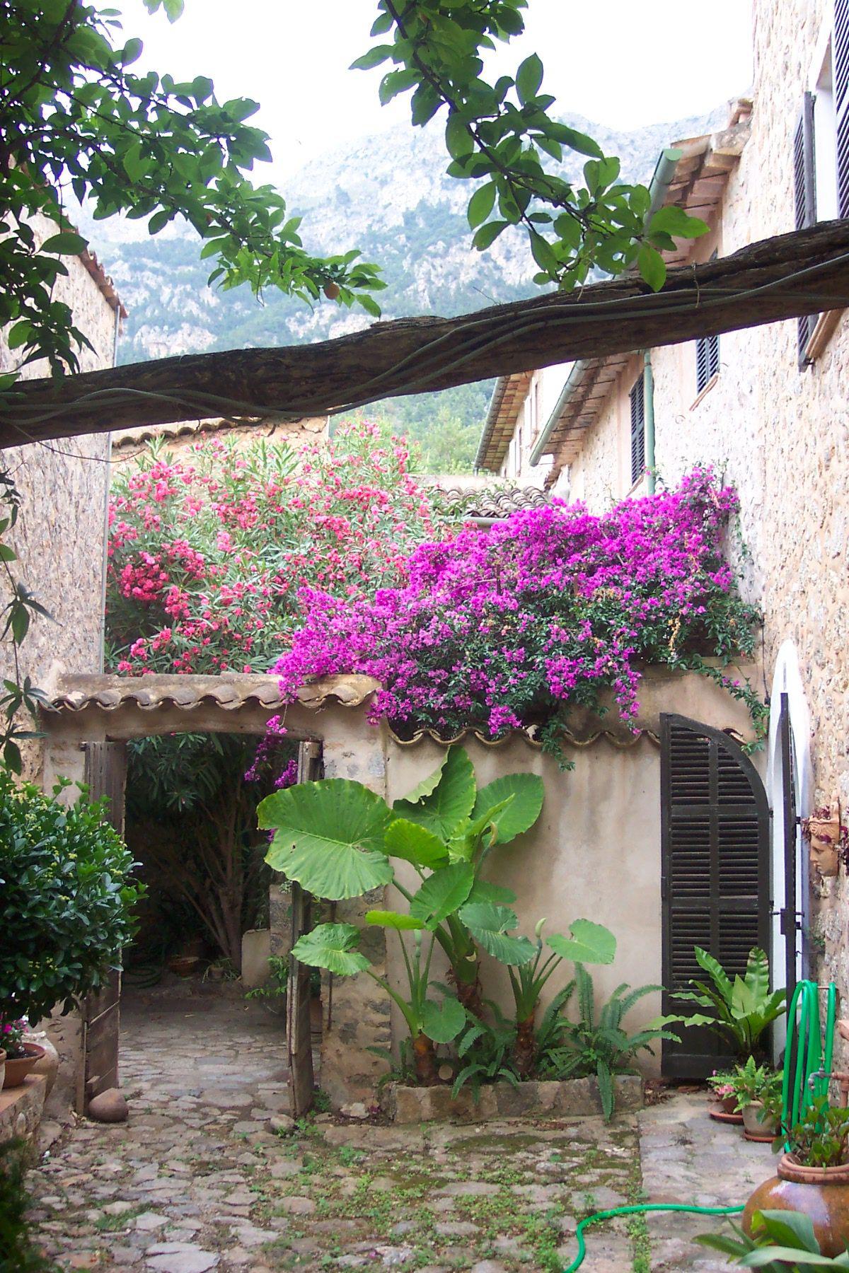 Ross's patio & garden.3.jpeg