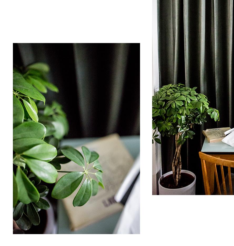 Männerpflanzen/ Pflanzen des Monats Juni