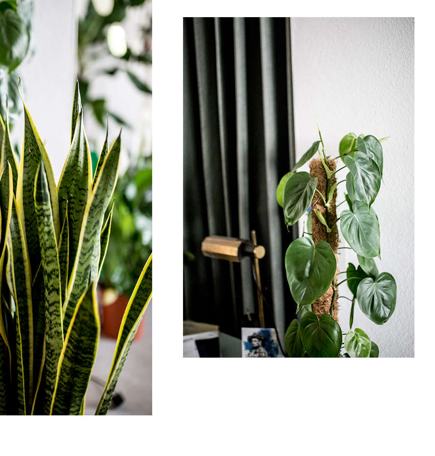 Bogenhanf&Philodendron
