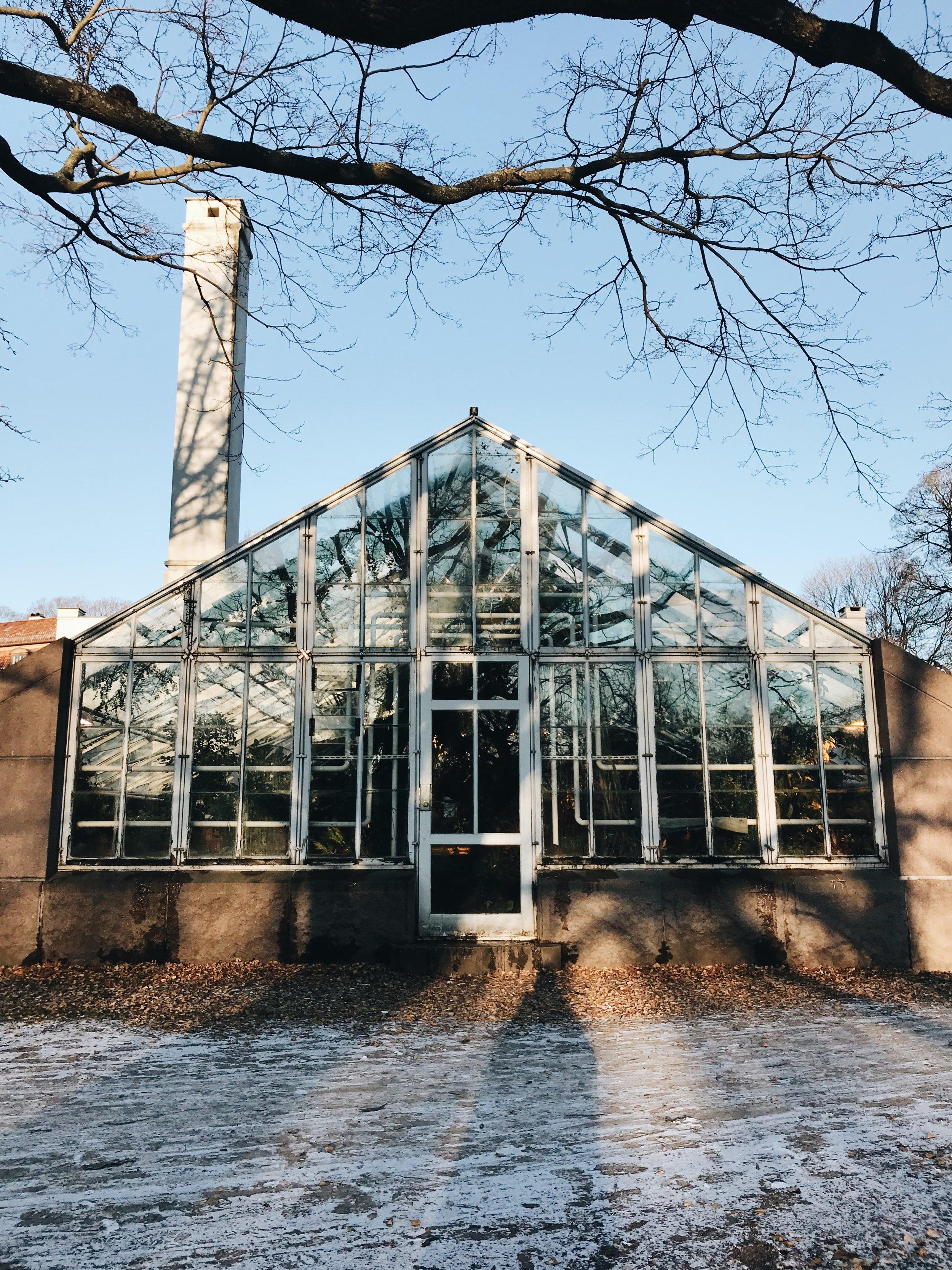 Der Botanische Garten in Oslo ist zwar klein, dafür unfassbar warm und das Beste ist, es kostet nicht einmal Eintritt, um sich bei Minusgraden aufzuwärmen!