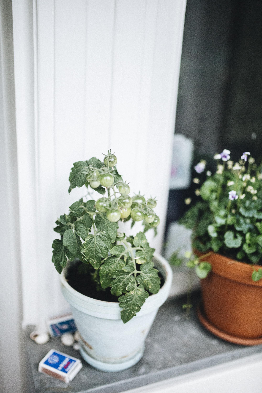 .Plantstory Judith Springer