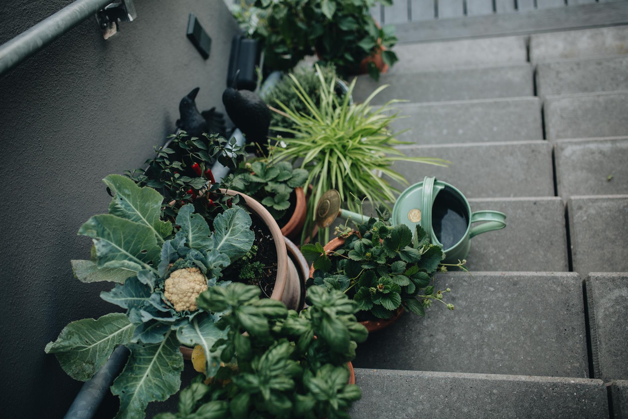 Plantstory Esther  (146 von 147).jpg