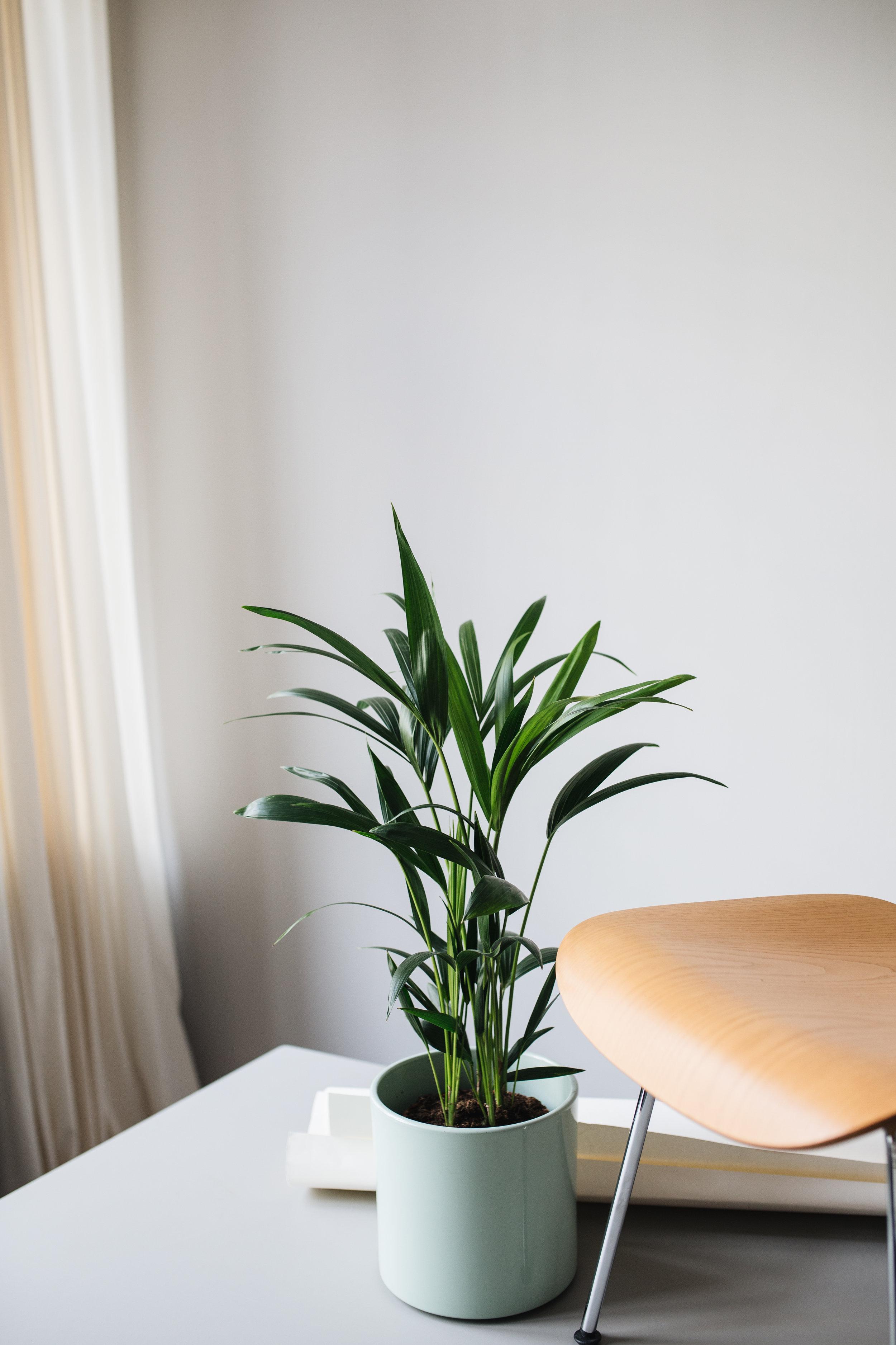 Zimmerpflanzen des Monats 2019 — Herz und Blut - Interior ...
