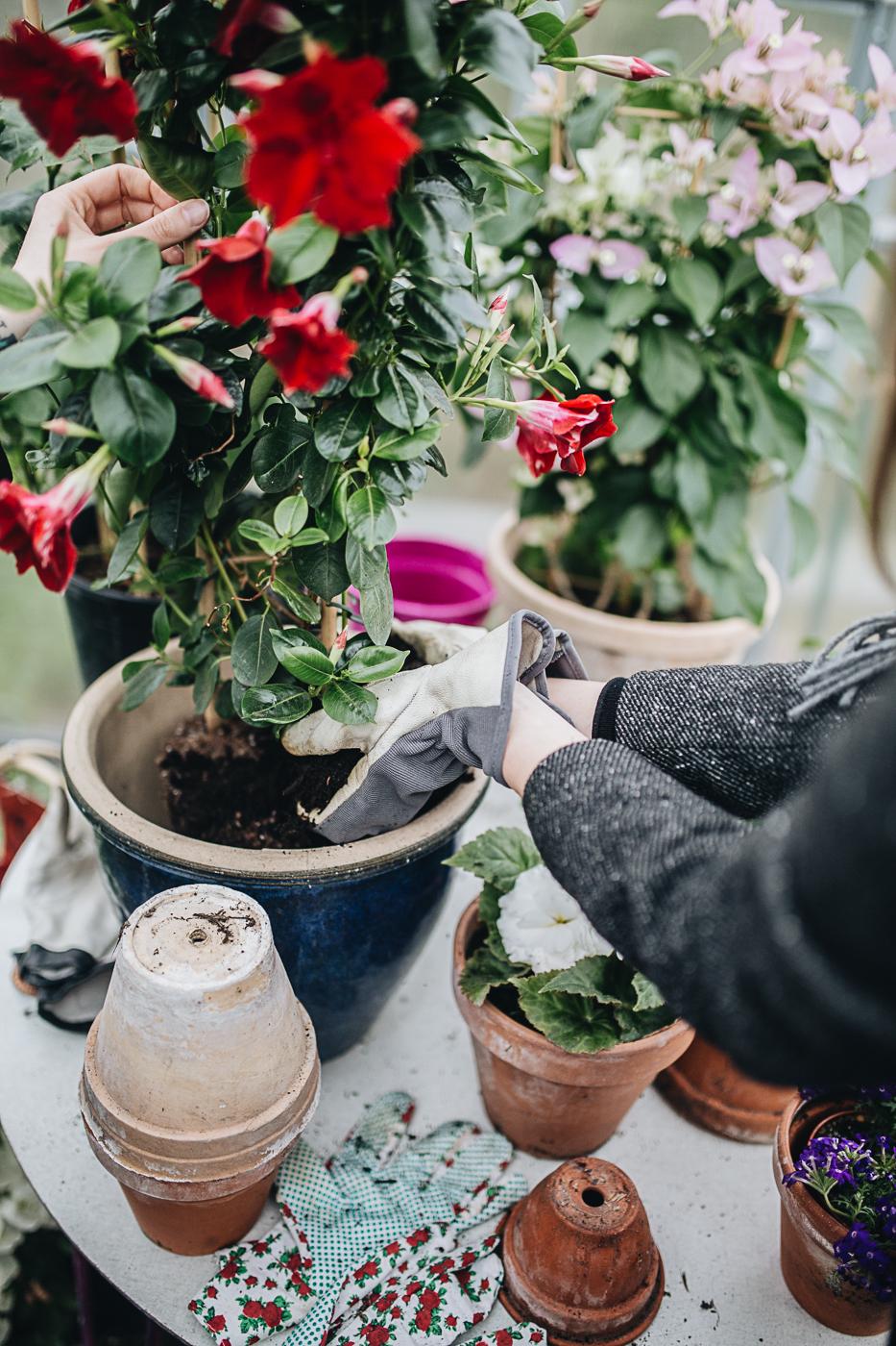 Happy Gardening 2019!
