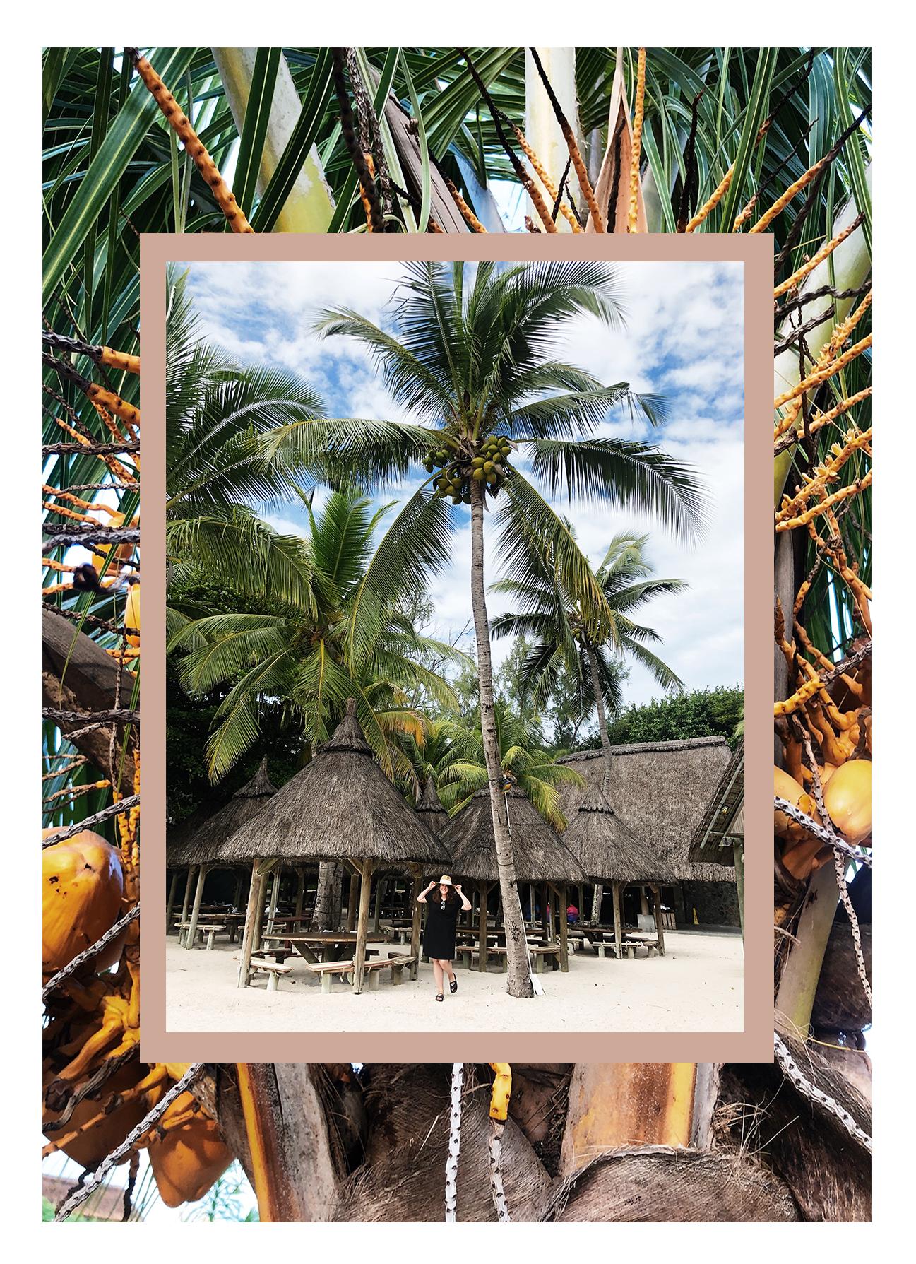 Wie wächst eigentlich Ananas? Travel Guide Mauritius