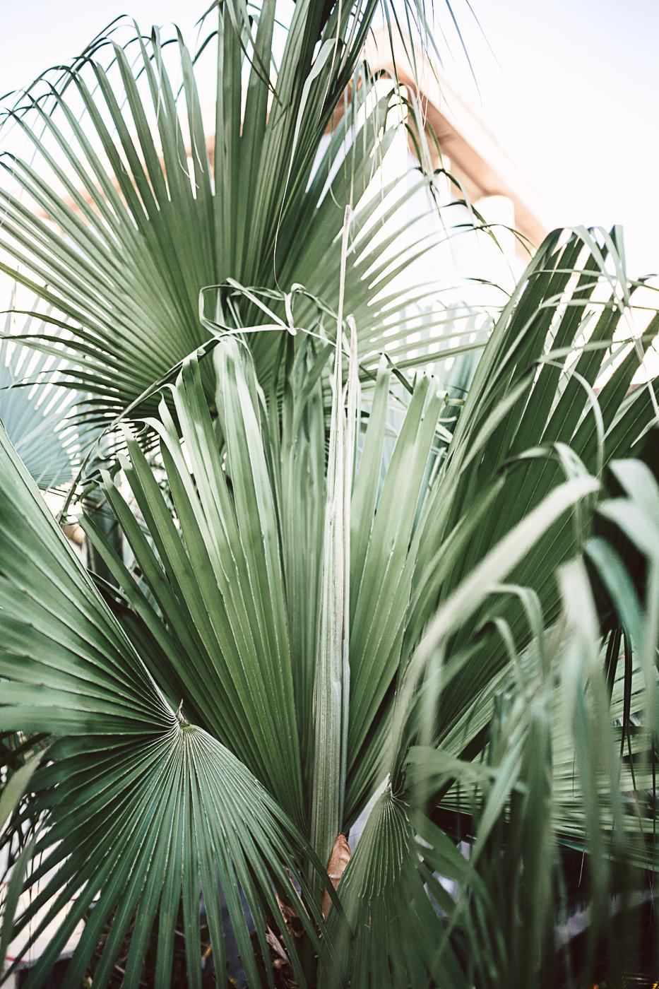 Tui Blue Palm Garden (24 von 130).jpg