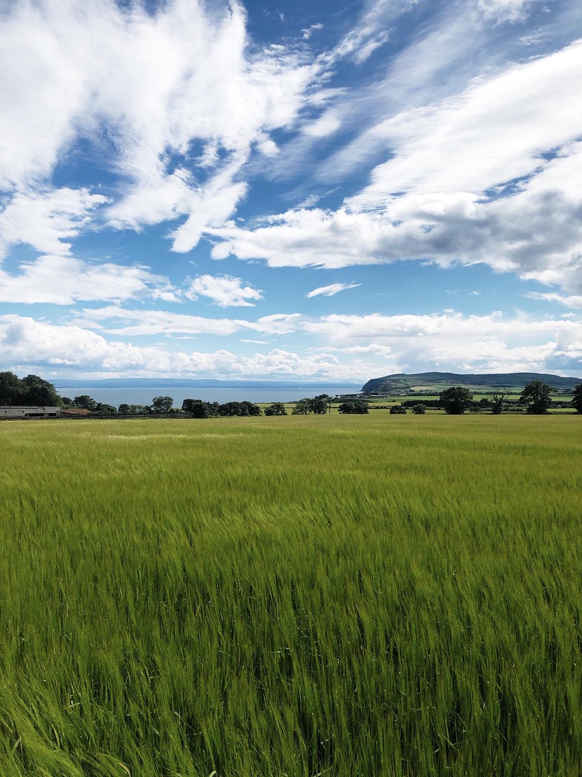 Glenmorangie Herz&Blut Clos19 Feld Schottland Gerste Whisky
