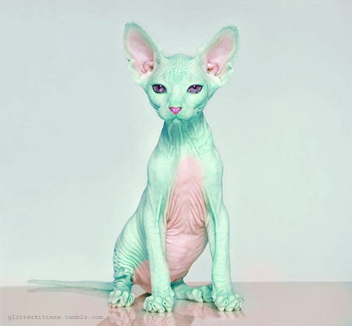 i'm not really into cats, but if i had one it'd look like this + some kind of hairpiece that looks like my hair.
