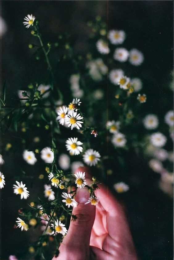 IMAGE SOURCE: PINTEREST