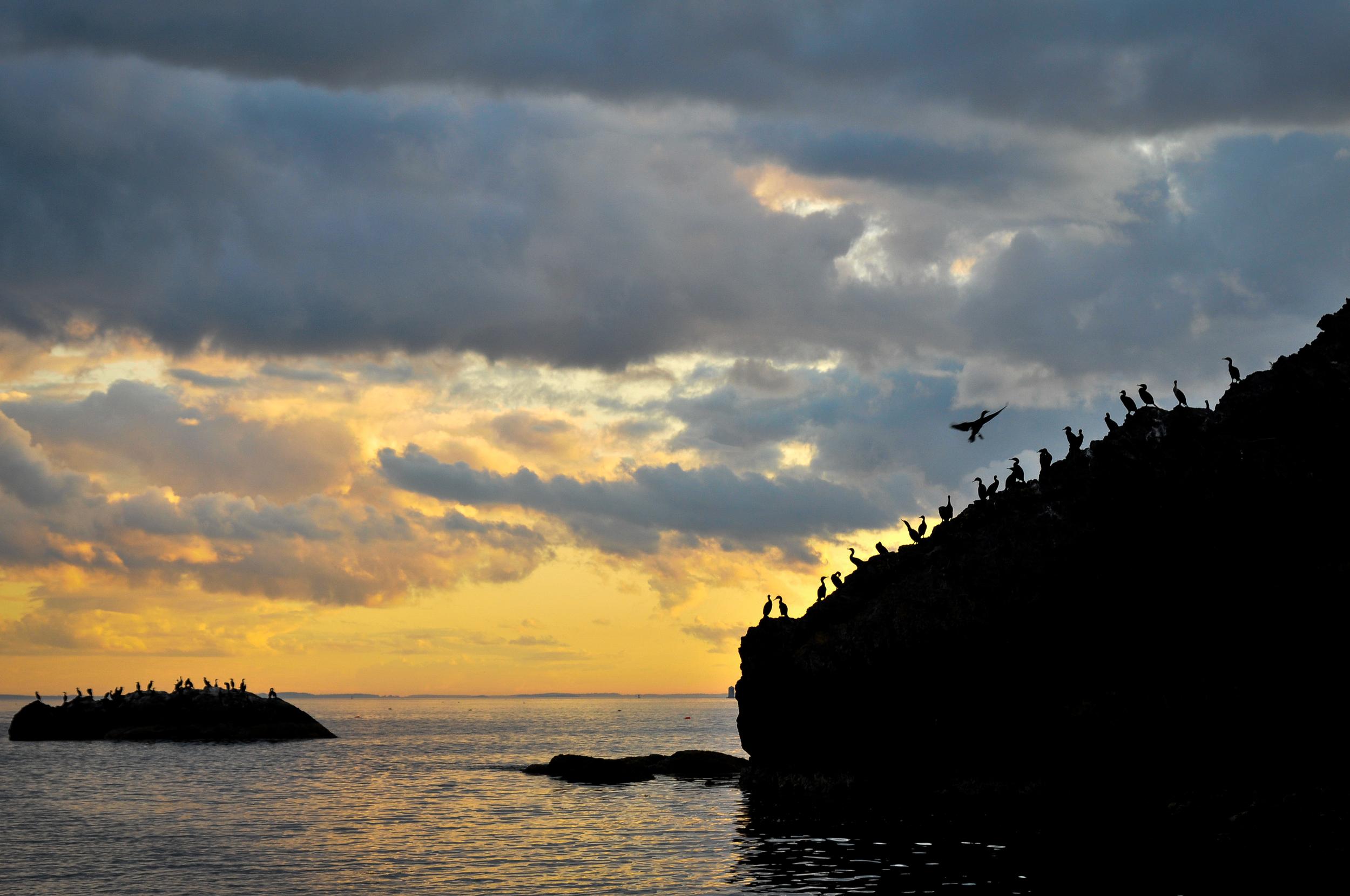 cormorants3-0004.jpg
