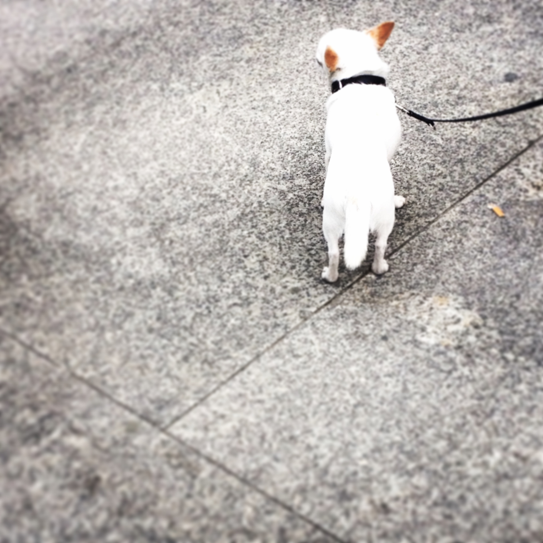 9-berlin-tiny-dog.JPG